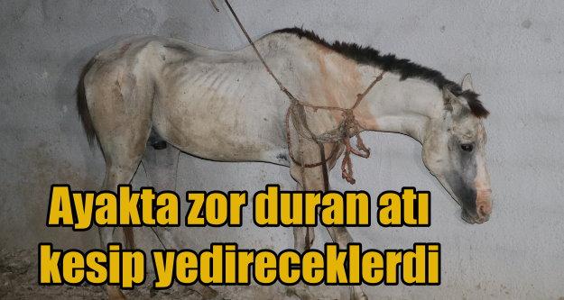 Atları kesilmekten polis son anda kurtardı