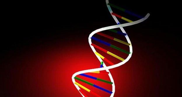 Bakteri DNA'sına hareketli görüntü kaydedildi
