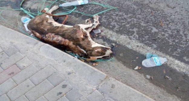 İzmir'de köpek vahşeti