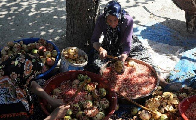 Çukurova'da kadınları nar ekşisi telaşı sardı