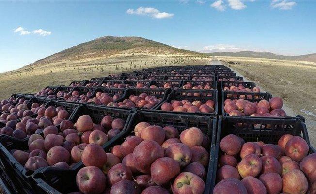 Lezzetini soğuktan alan elmaya Ruslar da talip