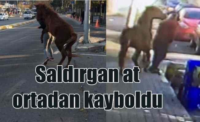 Sarıyer'de saldırgan at ortadan kayboldu