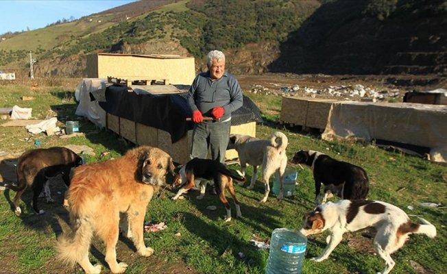 'Koca yürekli' öğretmen sokak hayvanlarına kulübe yapıyor