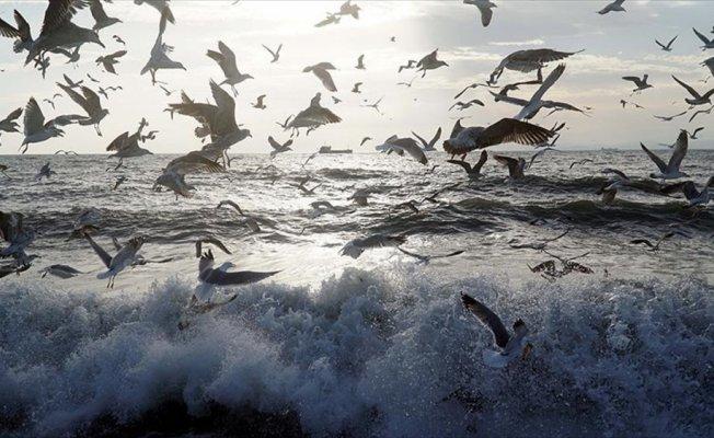 Lodos deniz ulaşımını olumsuz etkilemeye devam ediyor
