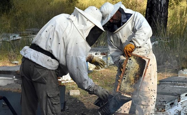 Arıcılara 60 milyon liralık destek