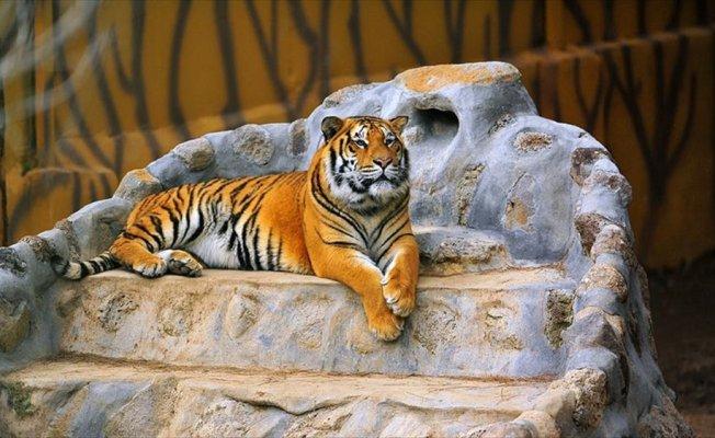 Gaziantep Hayvanat Bahçesi 3,5 milyon turisti ağırladı