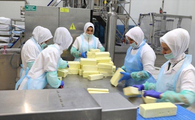 'Kelle peyniri'ni 14 ülkeye ihraç ediyorlar