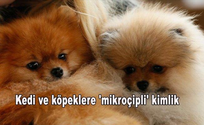 Kedi ve köpeklere 'mikroçipli' kimlik