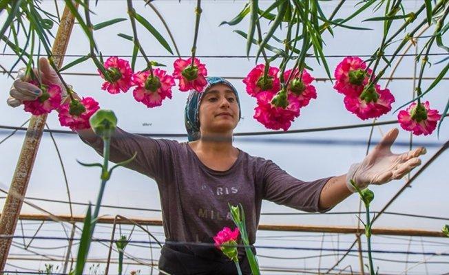 48 ülkenin kadınına 80 milyon dal Türk çiçeği