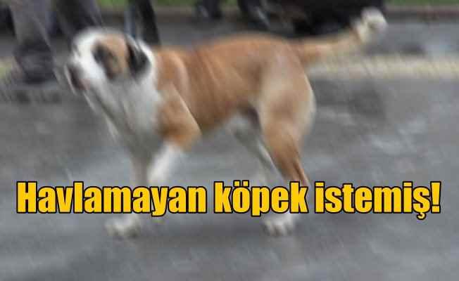 Havlamayan köpek istemiş; Köpek havladı diye mahkemeye koştu