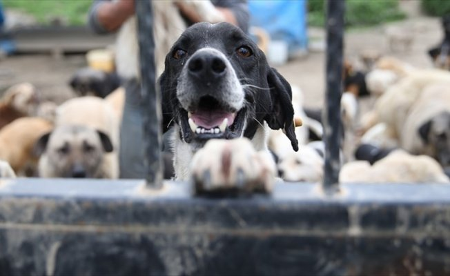 Hayvan haklarını ihlal edenlere 2 milyon 246 bin lira ceza