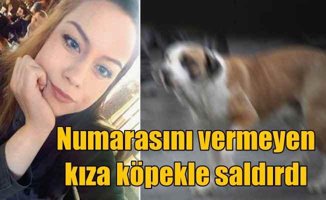 Telefon numarasını vermeyen kızın üstüne köpeğini saldı