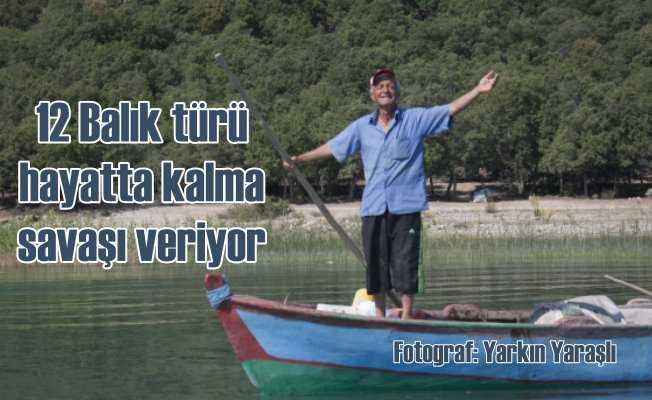 Beyşehir Gölü'nde hayatta kalma mücadelesi veren balık türleri