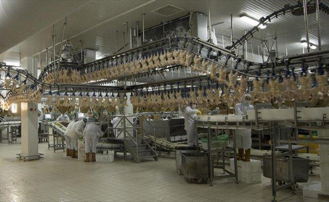 Rusya'ya 20 bin tonluk tavuk ihracatı yolda