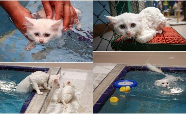 Van kedileri için 'özel havuz'