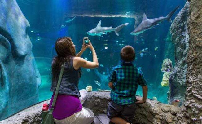 Sea Life, Madame Tussauds ve Legoland sizleri bekliyor