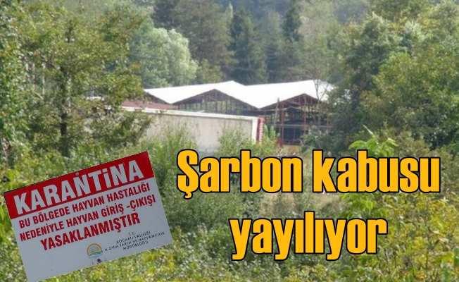 Gölcük'te şarbon virüsü; 3 köy karantinaya alındı