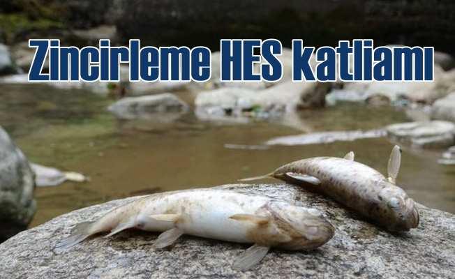 HES kamyonları nesli tükenmekte olan balıkları öldürdü