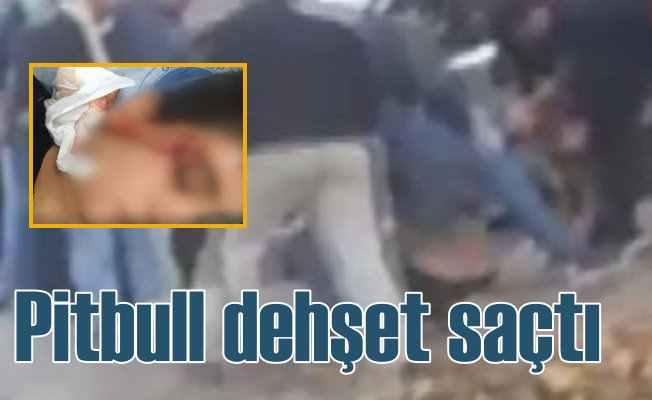 Pitbull cinsi köpek, sokakta çocuklara saldırdı