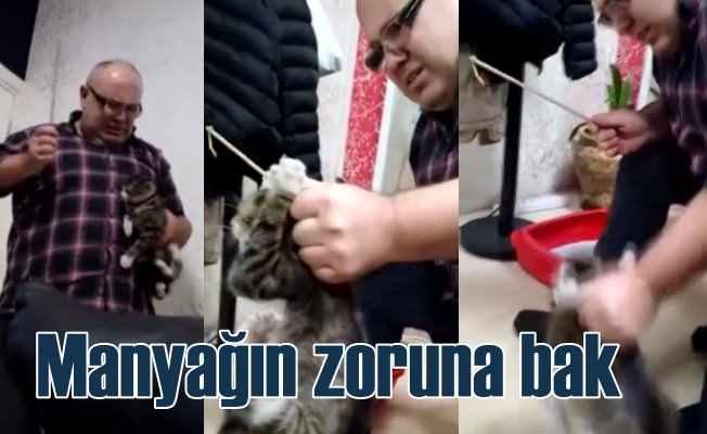 Kediye işkence yapan iş adamı akıl hastanesine gönderildi