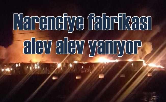 Naranciye fabrikası alev alev yanıyor