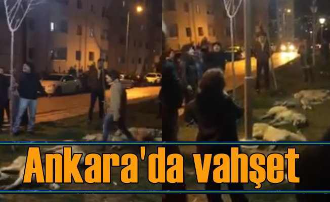 Ankara Batıkent'te vahşet, çok sayıda köpek zehirlendi