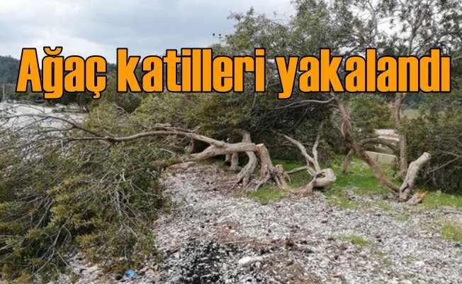 Kamp alanı yapmak için ağaç kesmişler