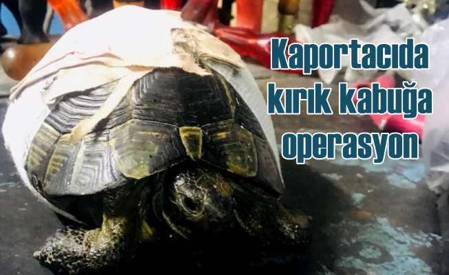 Kaplumbağa'ya kaportacıda kabuk operasyonu