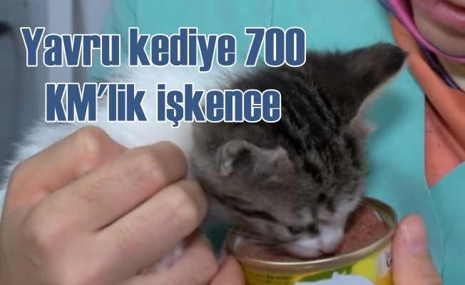 Yavru kediye 700 KM boyunca işkence