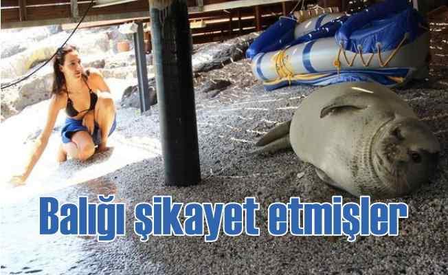 Fok balığının yaşam alanını işgal ettiler, şikayetçi oldular