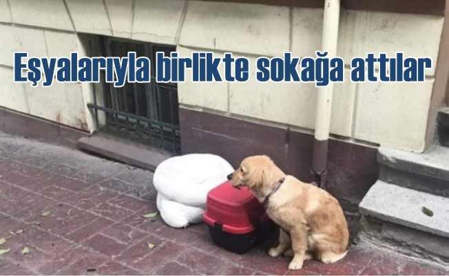 Terk edilen köpeğe tepkiler gün boyu sürdü