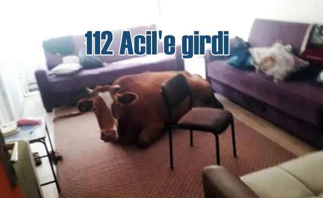 112 Acil'de inek var | Görenler hayrete düştü