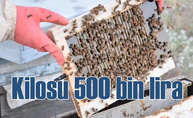 Arı zehiri | Kilosu yarım milyon lira ama şifa kaynağı