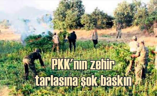 Diyarbakır Lice'de PKK tarlalarına operasyon