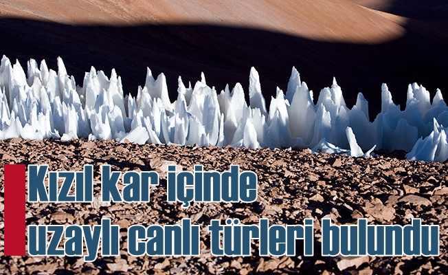 Kızıl kar | Çöl buzullarında Mars hayatı