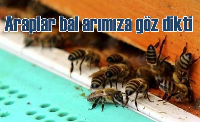 Araplar bal arılarımıza göz dikti