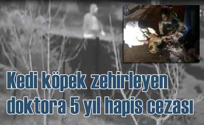 Köpek zehirleyen doktora 5 yıl hapis cezası