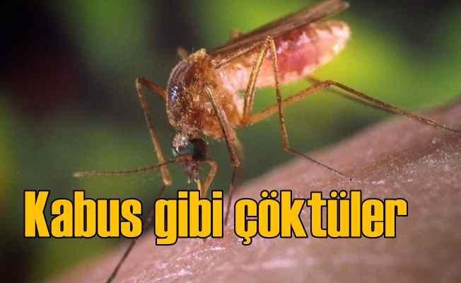 İstanbul'u sinekler bastı | Tehlikeli virüs bulaşabilir