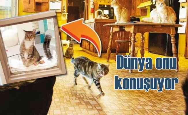 Sosyal medya asi kedi Quilty için ayaklandı