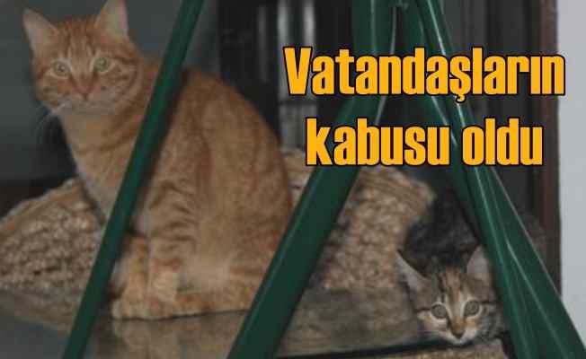 Psikopat kedi, vatandaşlara saldırıyor