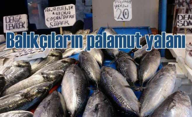 Tombik balığını palamut diye satıyorlar