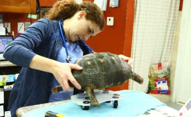 Egzotik Hayvanlara İlk Yardım belgeseliyeni bölümleriyle Nat Geo People'da