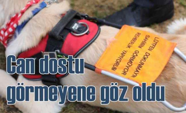 Rehber Köpekler görme engellilere destek oluyor