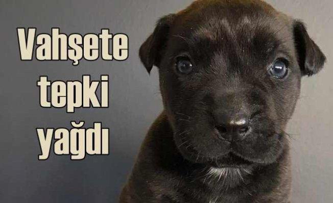 3 aylık yavru köpeği vahşice öldürdü | Bu yaratığa en ağır ceza verilsin