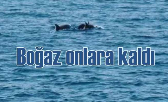 Yunus balıkları Boğaz sularını mesken tuttu