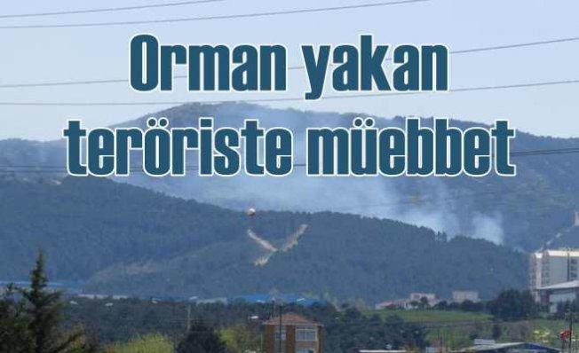 Aydos Ormanlarını yakan teröriste ömür boyu hapis cezası