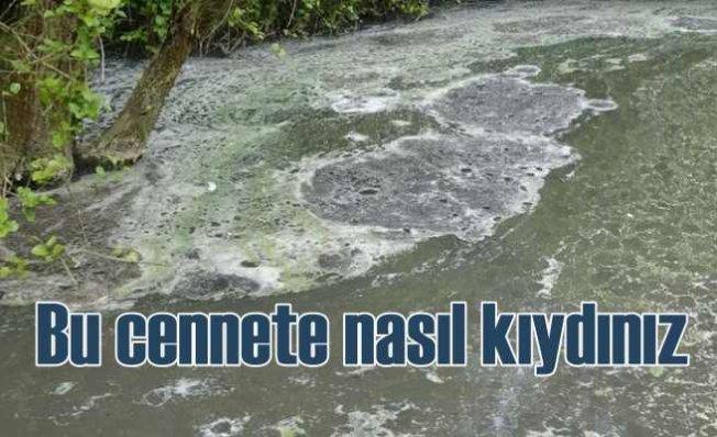 İstanbul'un akciğeri Aydos Ormanları'nda kirlilik alarmı