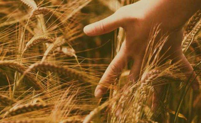Sürdürülebilir bir tarım için ekim nöbeti sistemi doğru uygulanmalıdır