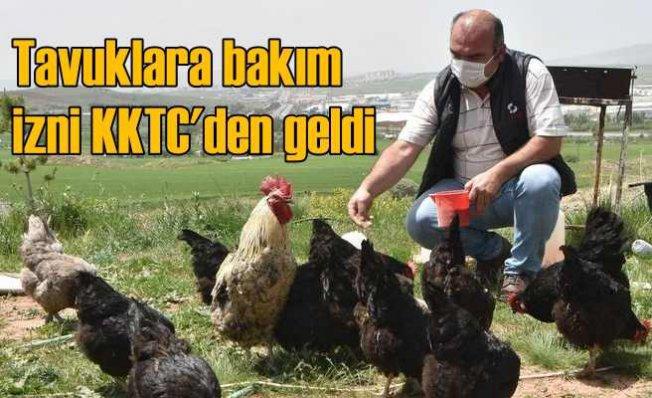Tavuklarına bakmak için yanlışlıkla izni KKTC'den aldı