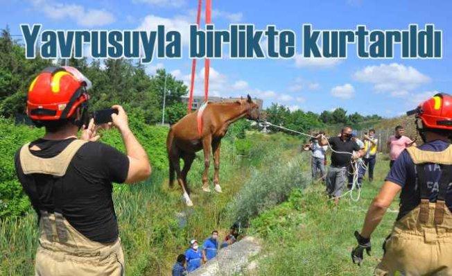 Eyüpsultan'da dereye düşen at ve yavrusu kurtarıldı